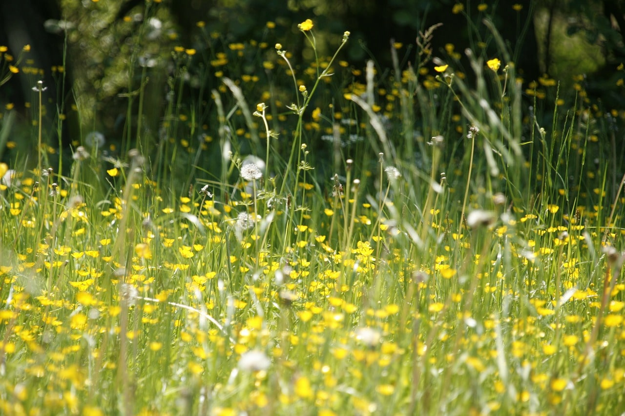 How Can Acupuncture Relieve Hay Fever?